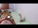 реакция кота на гимн россии