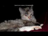 «Мои КОТЕ» под музыку Про кошек :о) - Кица Кицуня. Picrolla